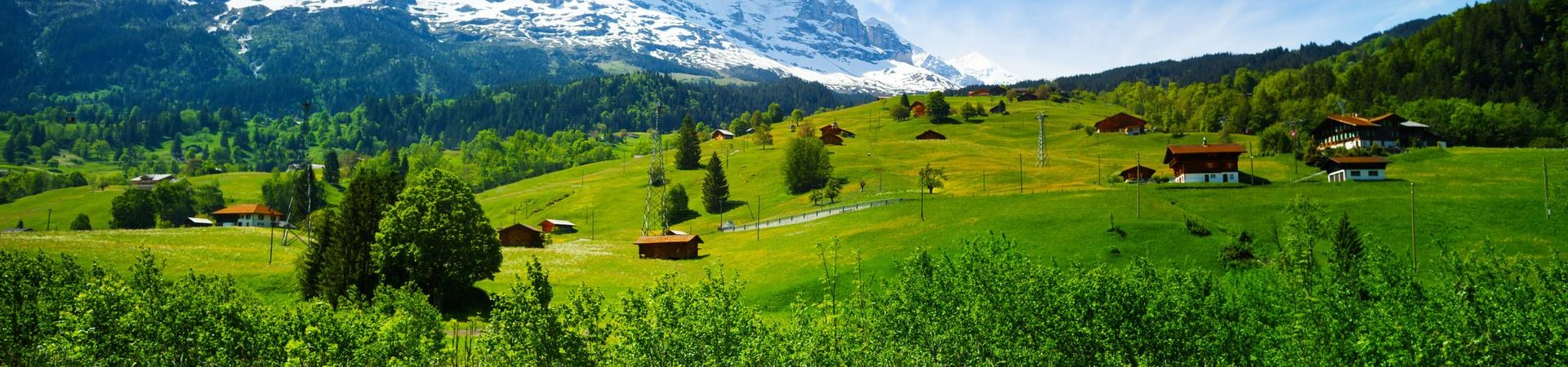 Blooming yellow flowers field of beautiful Swiss landscape with Alps mountains covered with snow in summer